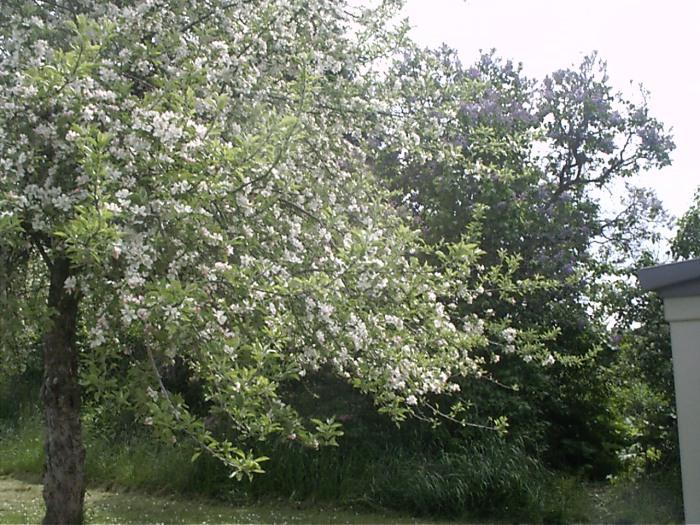 Spring Garden 2011 005