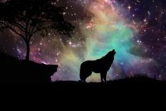 wolves stars