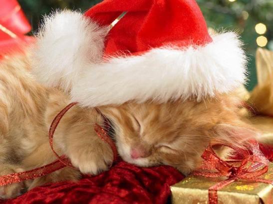 kitten santa hat.jpg